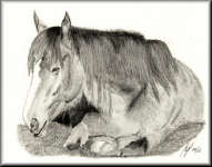 a pencil drawing of a horse