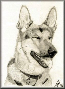 Rosie - A pencil sketch by John W Johnston