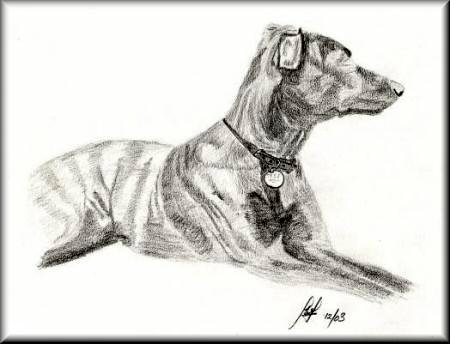 Tess - A pencil drawing by John W Johnston