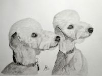 """Willow and Ash"" -  A drawing of two Bedlington Terriers<br/>Graphite 15"" x 11"" on Daler-Rowney Heavyweight 135lbs Acid Free paper"