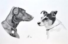 """Tess and Sally"" - My two dogs, both sadly no longer with us. Tess was a Whippet/Collie cross, and Sally was a Jack Russell. I originally drew this double portrait in 2006 (See Pencil 1) and the progress I've made over the years is most encouraging.<br/>Graphite 15"" x 11"" on Daler-Rowney Heavyweight 135lbs Acid Free paper"